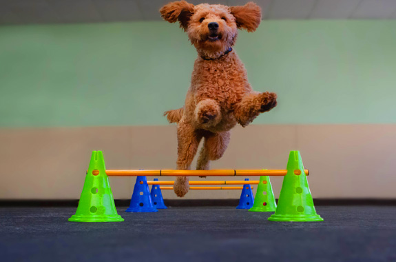 dog daycare orange county