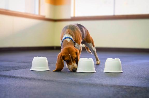 dog daycare orange county