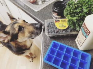DIY frozen dog treats