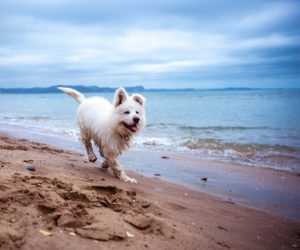 dog beaches in orange county